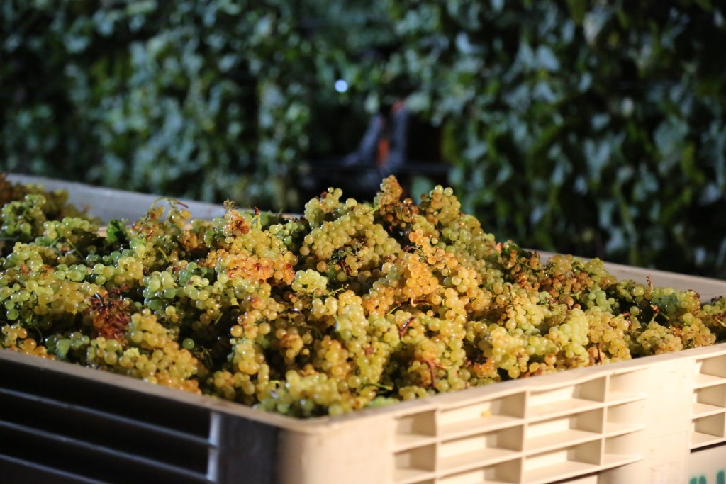 Migliori Vini Marchigiani - Az. Agricola Claudio Morelli